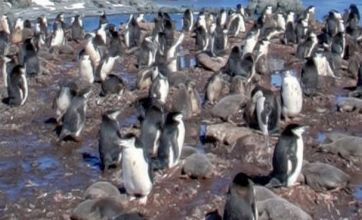 Antarctic penguins and Pompeii: Google Street View covers seven continents