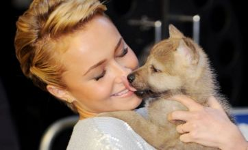 Hayden Panettiere experiences puppy love at Alpha and Omega premiere