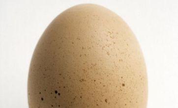 After the round egg: Some simply eggs-traordinary facts