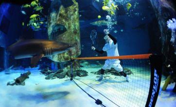 Shark v Human – at underwater tennis