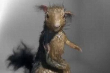 The Russian anti-alcoholism advert, featuring a drunken red-eyed squirrel, has gone viral