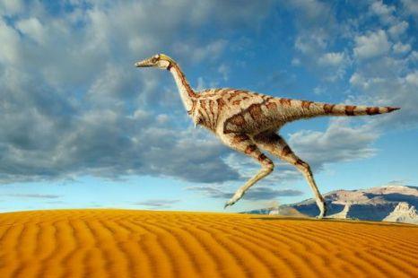 The Linhenykus monodactylus is a miniature version of T-rex (Pic: PA)