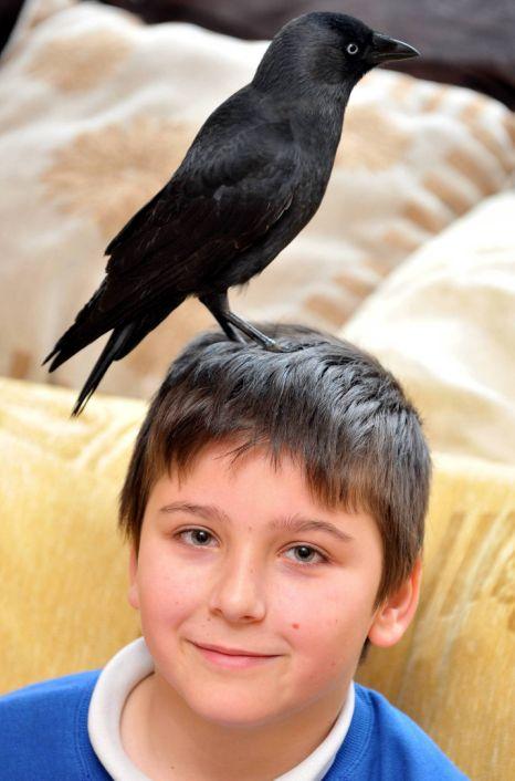 Emmanuel Adams watches TV with his jackdaw bird