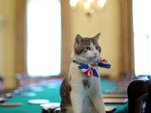 Cameron jokes he will 'double Larry the cat's security' following Crufts dog 'poison' death
