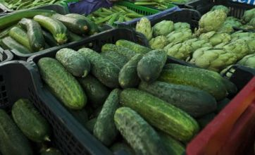 Scientists probe deadly cucumbers as E.coli fears grow
