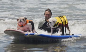 Surfing dogs: Pooches ride out the waves in Californian competition