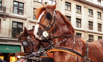 Ten hurt as horse and cart runs into crowd