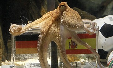 Paul the Octopus replacement sought in 'Octo-Idol' for Women's World Cup