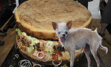 World's largest hamburger v World's ugliest dog: Freak Out