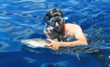 Jaws dropping: It's sun, sea and sharks