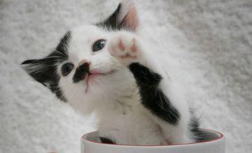 Kitler, the kitten who looks like Hitler, finds new home