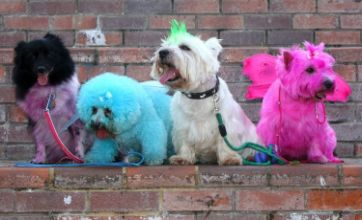 TOWIE fanatic gives her dogs fur-jazzles and dyes them pink