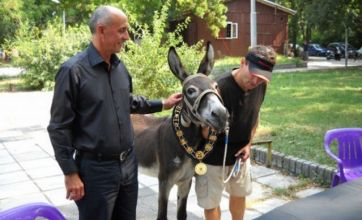 Political party enters a donkey to run for mayor in Bulgarian elections