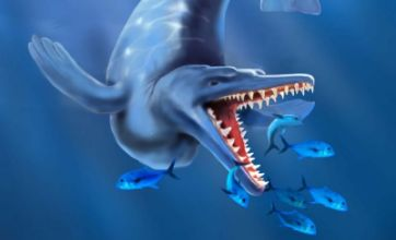 Scientists discover 49million-year-old jawbone of oldest fully aquatic whale
