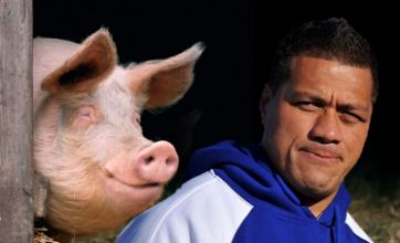 Samoan rugby manager fined 100 pigs for misbehaviour at World Cup