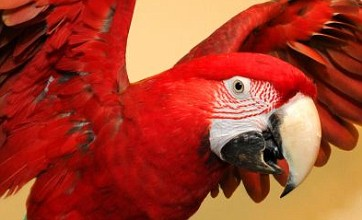 Mr T the swearing parrot told to watch his language