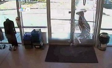 Deer caught on CCTV crashing into shop and shattering glass entrance