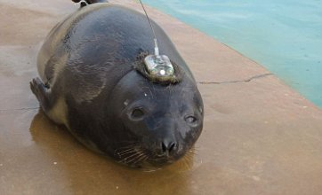 Lost seal pup winds up in Skegness after 3,200km trip from Greenland