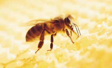 How will the decline in bee numbers affect the human race?