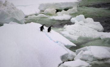 Earth's next ice age could be delayed by global warming, research finds