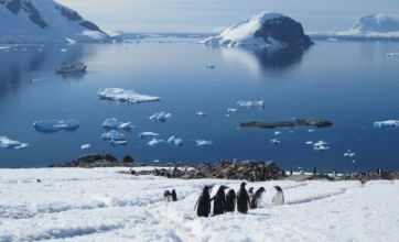 The penguins are impressive but it's the ice that's the real star of Antarctica