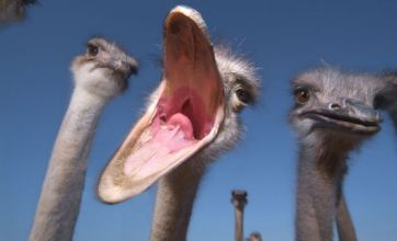 Cute alert: Ostriches and chamelons pose for close ups in striking pictures