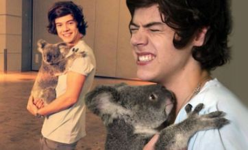 One Direction in chlamydia scare after handling koalas Down Under