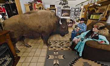 Cowboy and wife set up home with two buffalo and a wolf