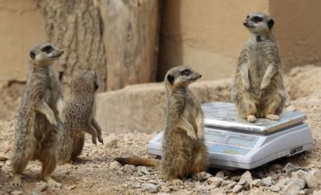 London Zoo staff begin vital statistics check at annual weigh-in