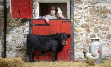 Northern Irish bull Archie is shortest in the world