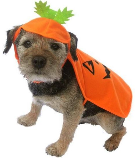 How to deal with Halloween – top pet buys