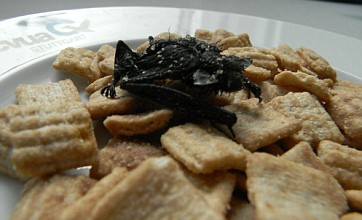Man finds mummified bat in his morning bowl of cereal