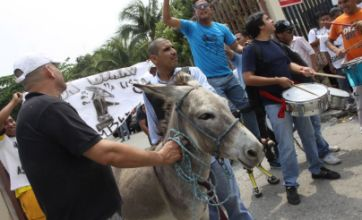 Donkey banned from running in Ecuador council elections