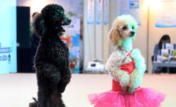 Pampered poodles centre stage in China's festival for pets