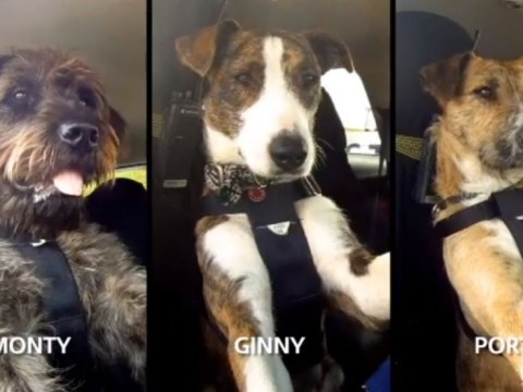 New Zealand rescue dogs pass their driving tests