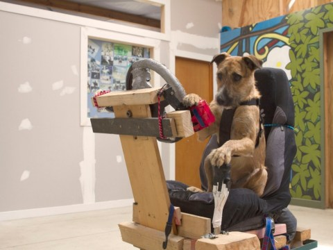 Rescue dogs learn how to drive in New Zealand