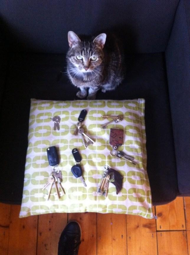 Milo the cat burglar with magnetic collar