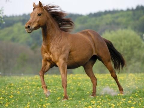 Horse meat burger jokes: top 10 gags following Tesco revelation