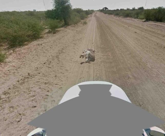 Google denies Street View car hit donkey in Botswana