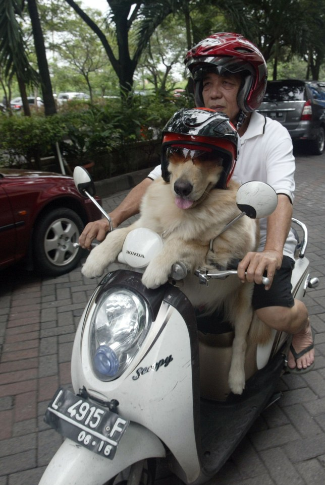 Handoko Njotokusumo and dog Ace on a moped