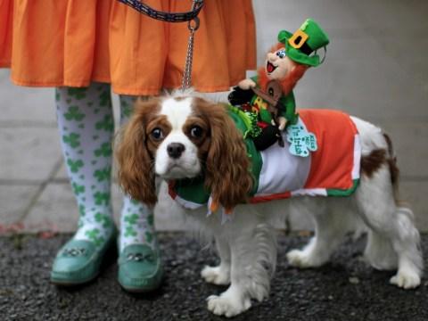 Gallery: Irish Kennel Club Pet Dog Expo 2013