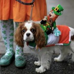 Margaret Farrell  with 'Shanty' winner of the best dressed competition at the National Show Centre in Dublin during the Irish Kennel Club Pet Dog Expo 2013. PRESS ASSOCIATION Photo. Picture date: Sunday March 17, 2013. Photo credit should read: Julien Behal/PA Wire
