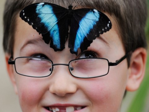 Gallery: Sensational Butterflies exhibition at the Natural History Museum 2013