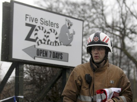 Animals killed in fire at Five Sisters Zoo in West Lothian