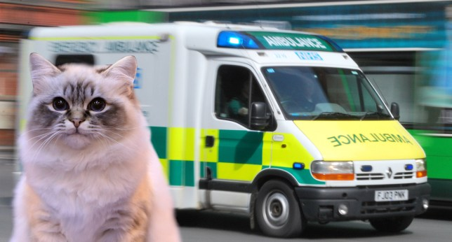 Paramedics were called for a cat with diarrhoea