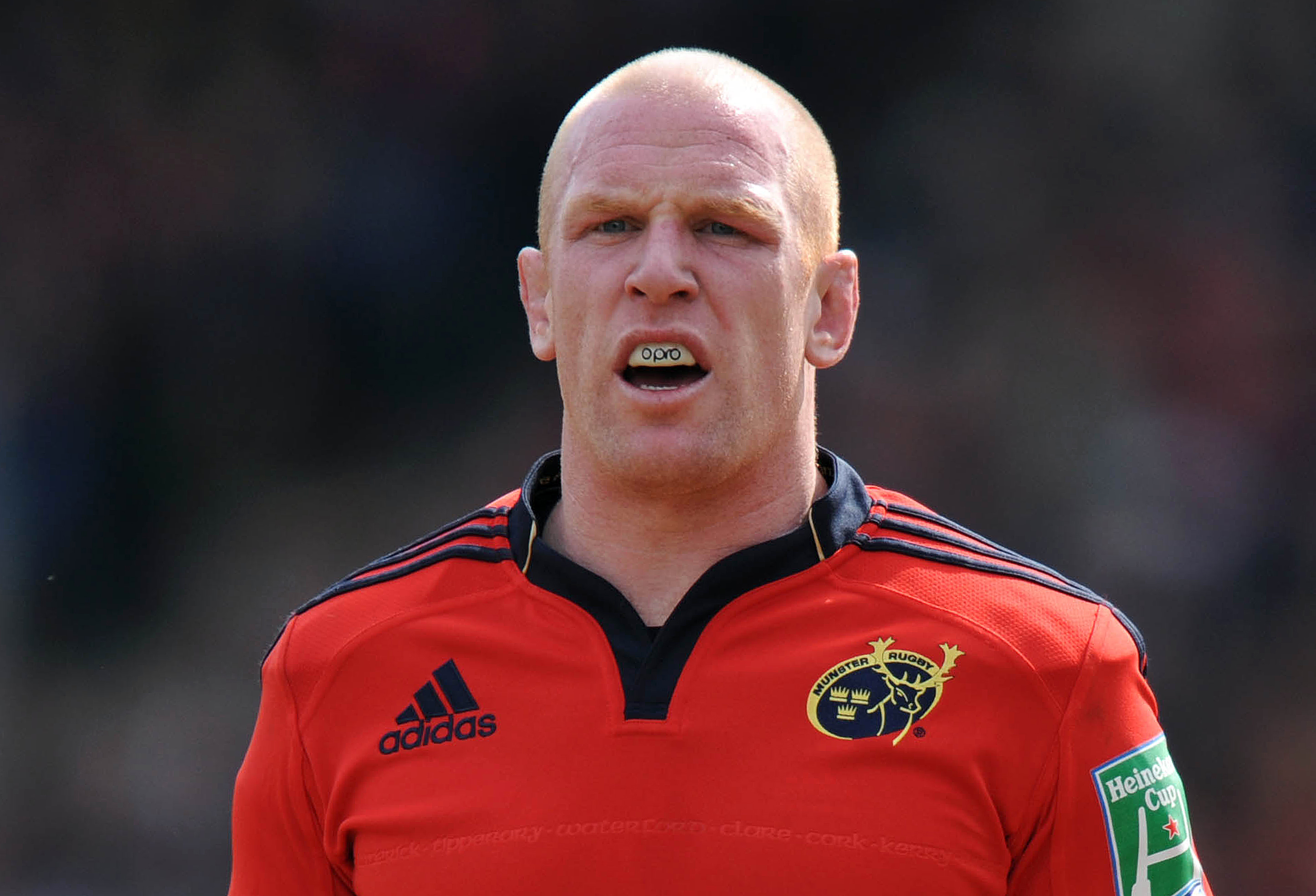 Michael Lynagh backs Paul O'Connell to beat Sam Warburton to Lions captaincy