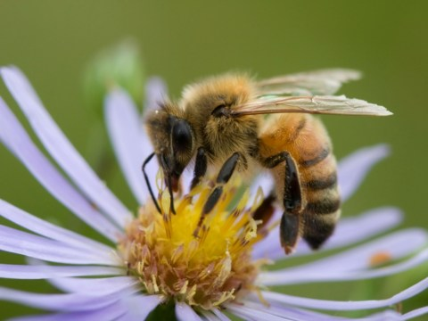 From Burt's Bees to Queen Bee, honey is the buzzword of the day for skincare