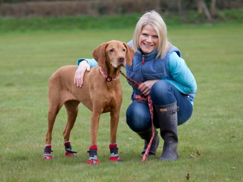Meet Millie the dog who can't leave home without wearing special boots because she's allergic to grass