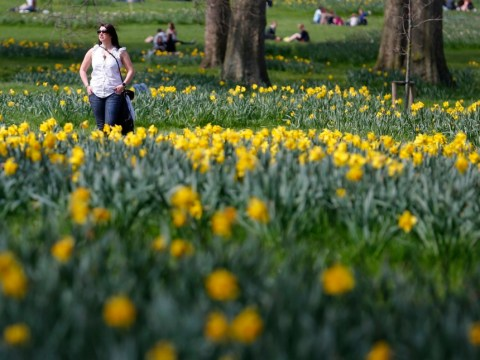 Bank holiday weather: 'Warm' temperatures predicted for weekend and into Monday