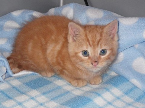 Get meowt of here! Kitten freed after five days trapped in wall cavity and then named… Macavity